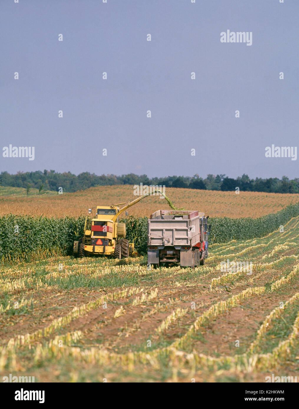 Prächtig Maissilage ERNTE ÜBER 2115 NEW HOLLAND SELBSTFAHRENDE HÄCKSLER mit @CH_45