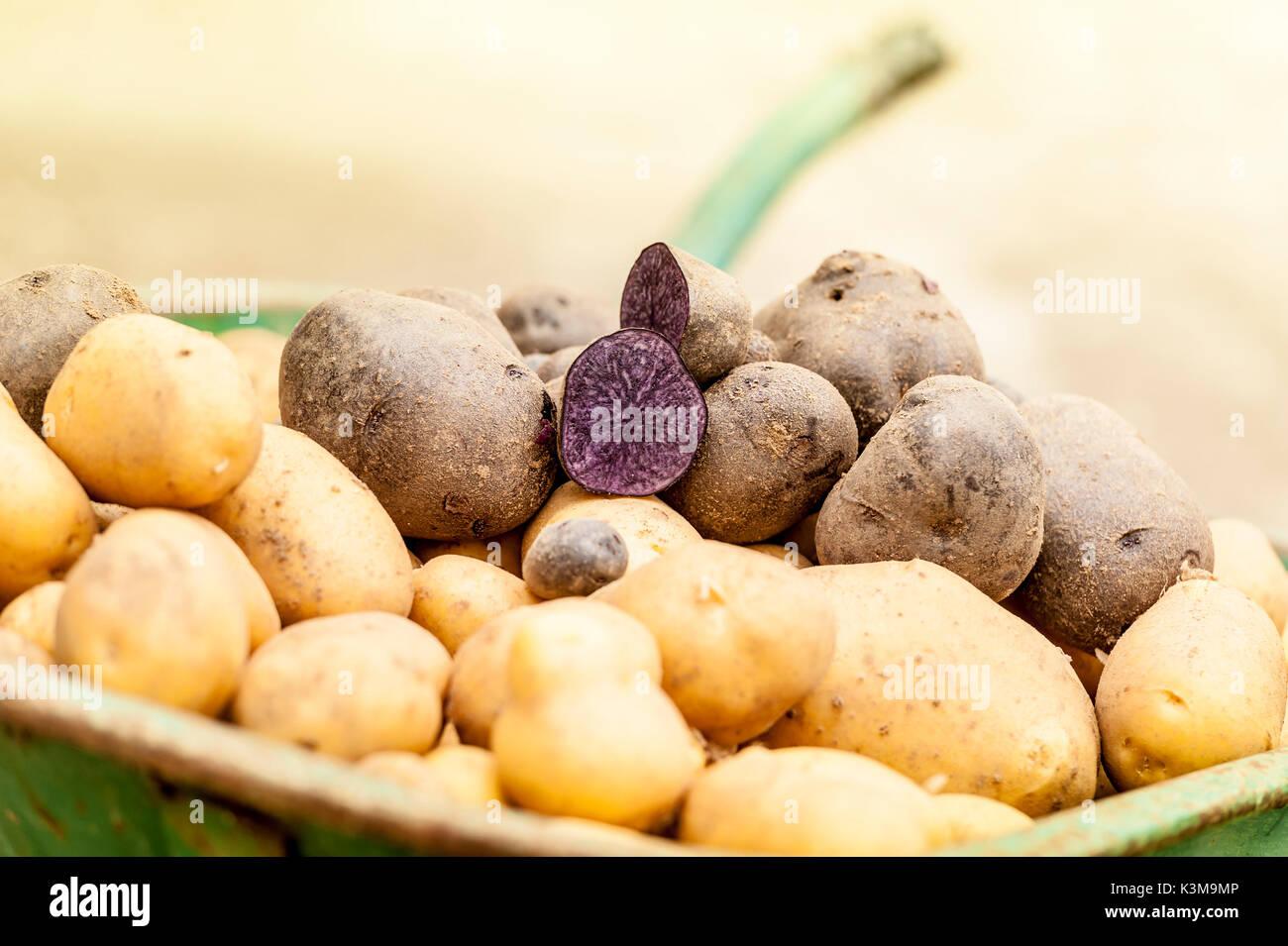 Kartoffel-, Gemüse-, Ernte, produzieren, Bauernhof Stockbild