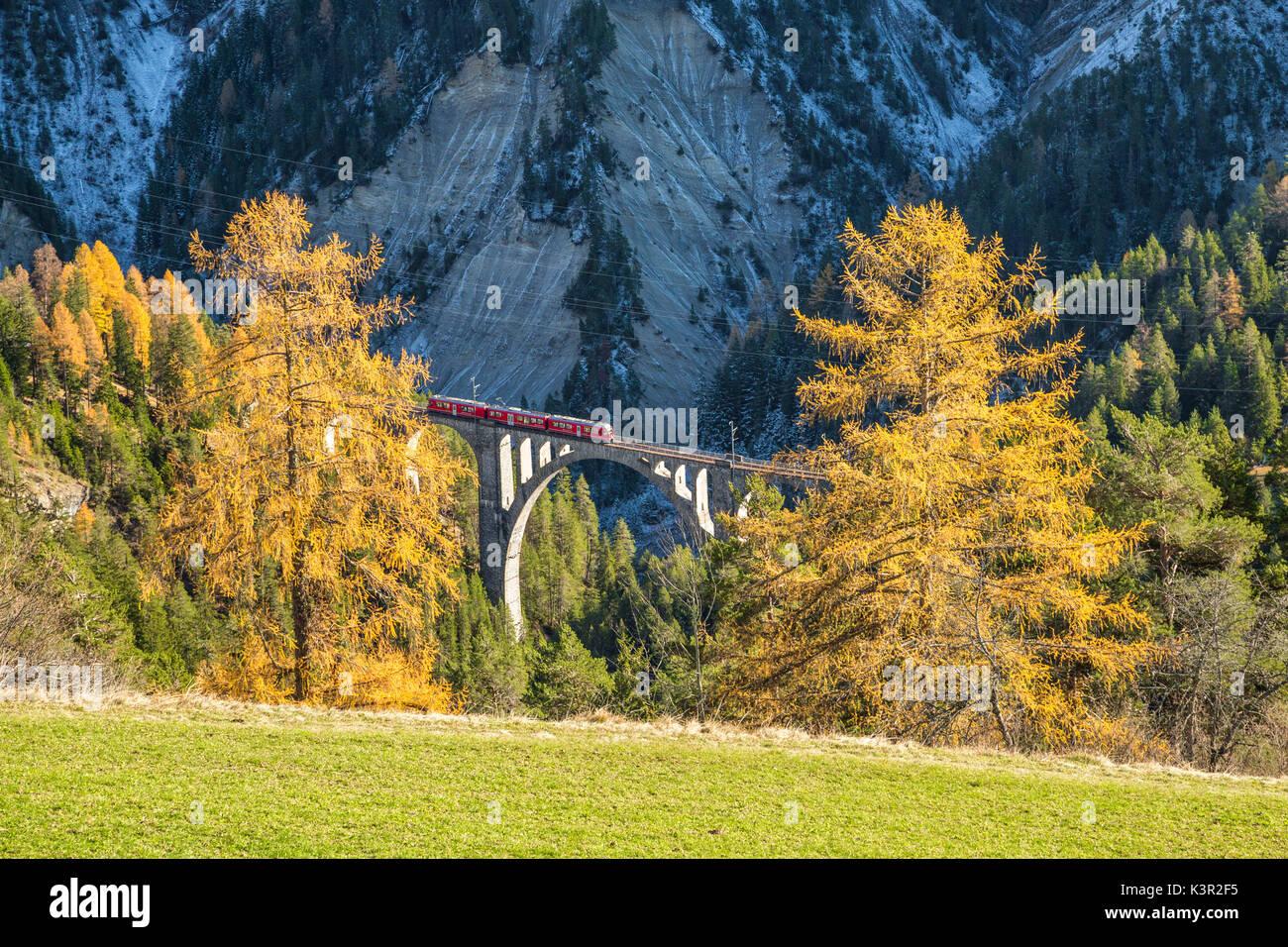 Bernina Express durchläuft Wiesner Viadukt umgeben von bunten Wäldern Kanton Graubünden Schweiz Europa Stockbild