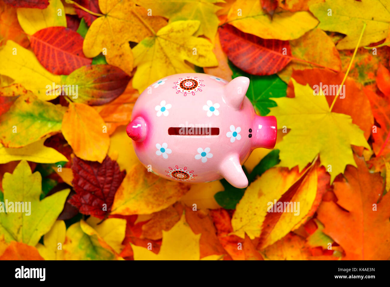 Piggy Bank und die Blätter im Herbst, niedrige Zinsen Stockbild