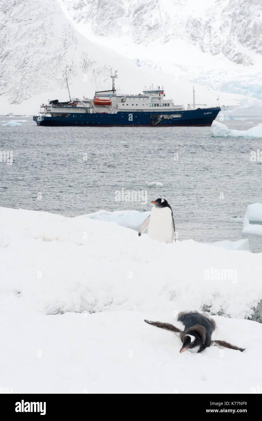 Plancius Kreuzfahrtschiff Petermann Island in der Antarktis Stockbild