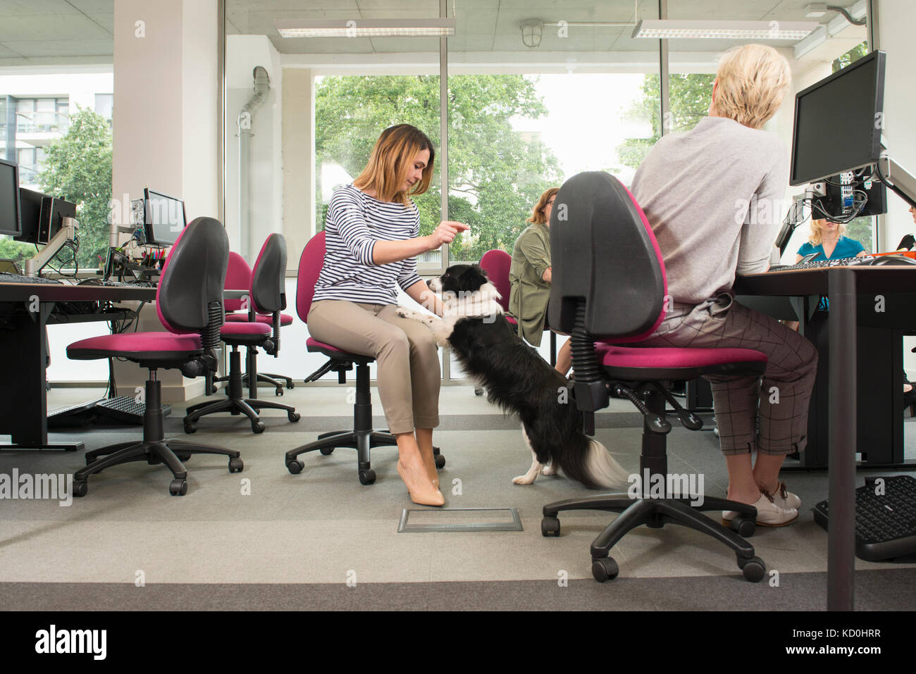 Frauen mit Hund im Büro Stockbild
