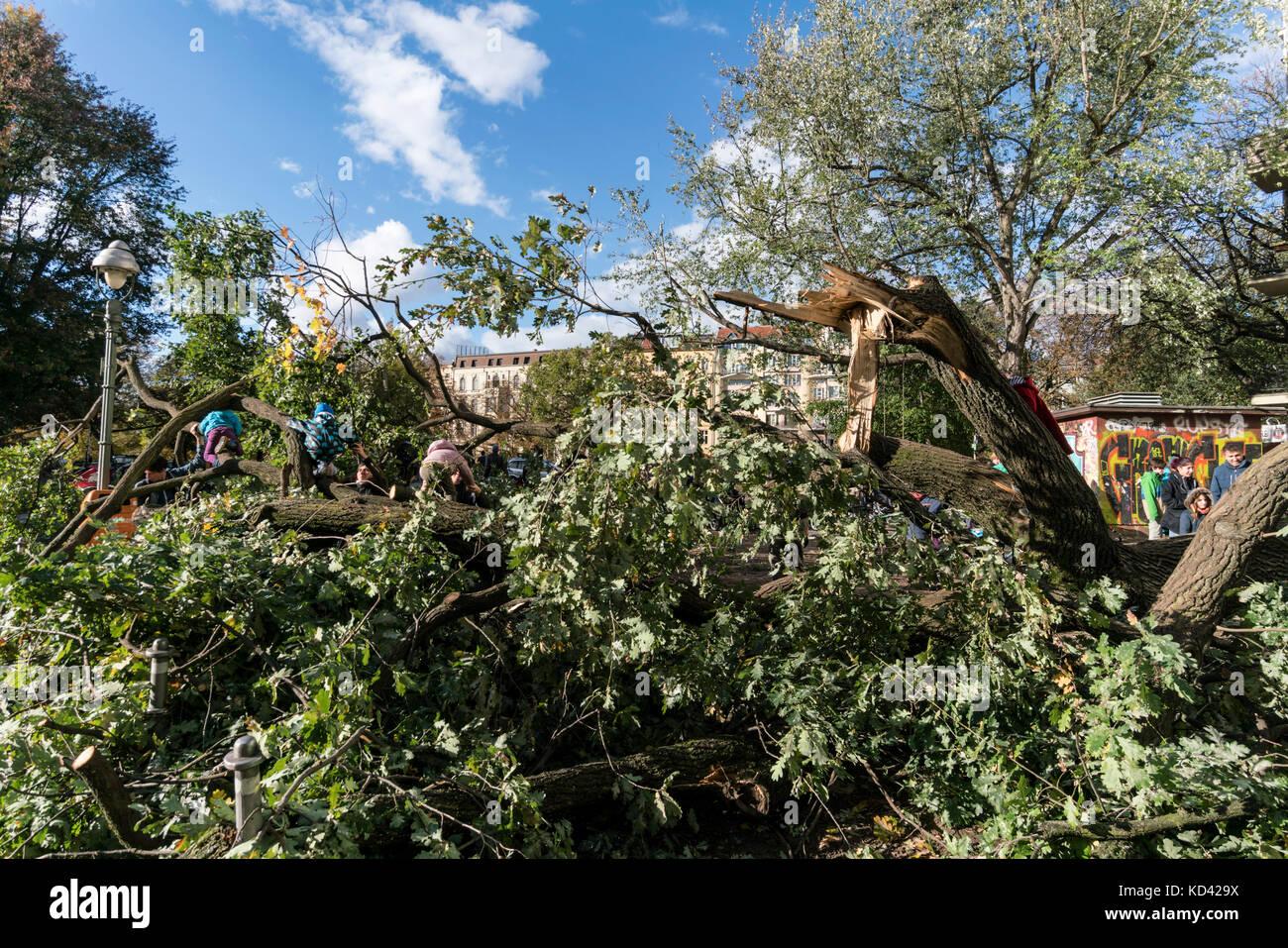 Sturm Xavier, Schäden durch fallenden Baum | sturmtief Xavier wuetet ueber Deutschland am 5.10.2017, Kinder Stockbild