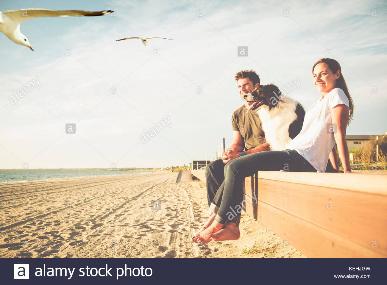 Vögel fliegen in der Nähe von kaukasischen Paar und Hund am Strand Stockbild