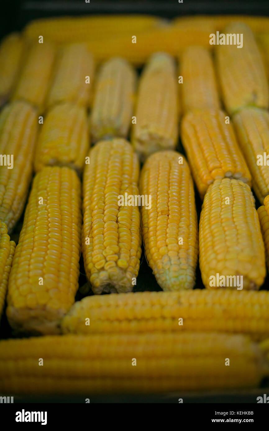 Mais auf Cob Stockbild
