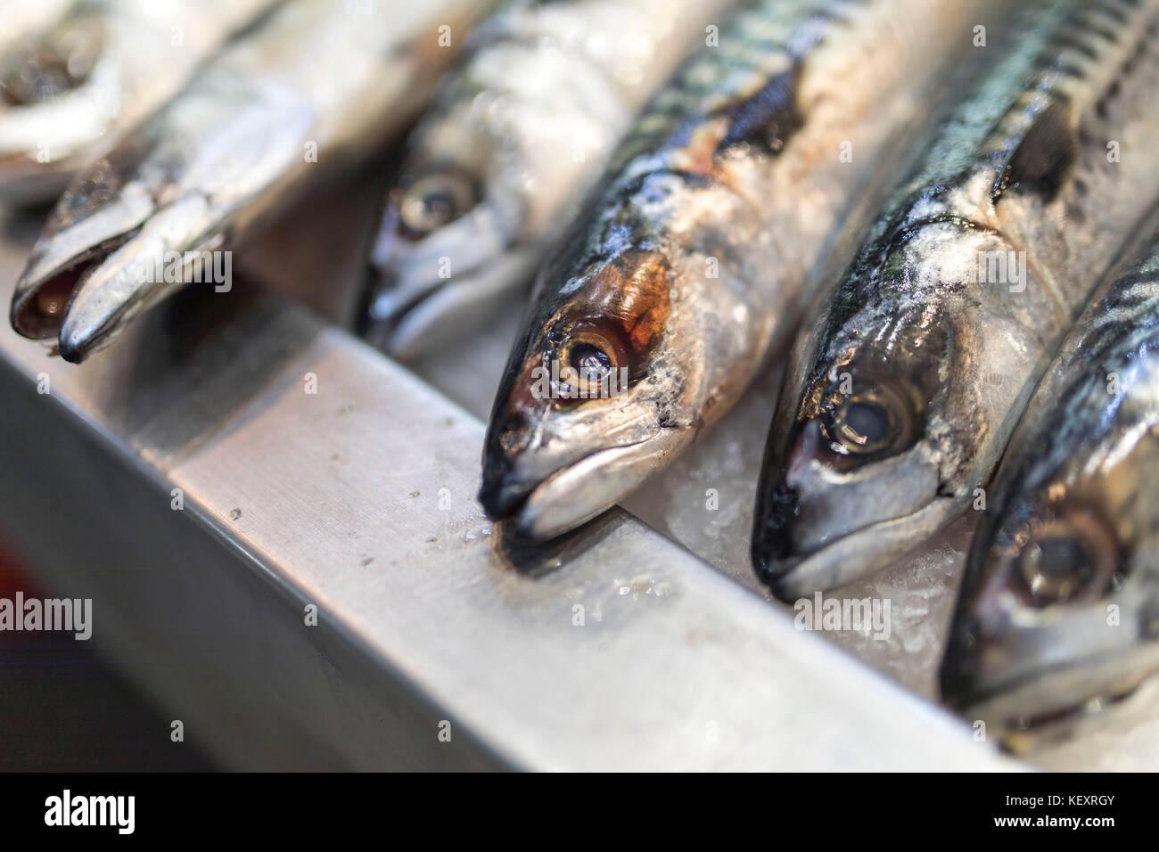 Eine Nahaufnahme von frisch gefangenen Makrelen auf Eis auf einem Markt in Großbritannien Abschaltdruck Stockbild