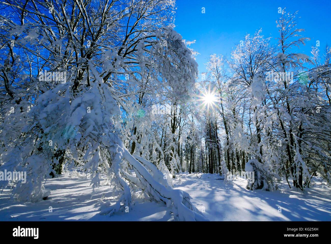Wald im Winter, erbeskopf Berg, 816 m, Saar-hunsrueck Natur Park, Rheinland - Pfalz, Deutschland, Europa Stockbild