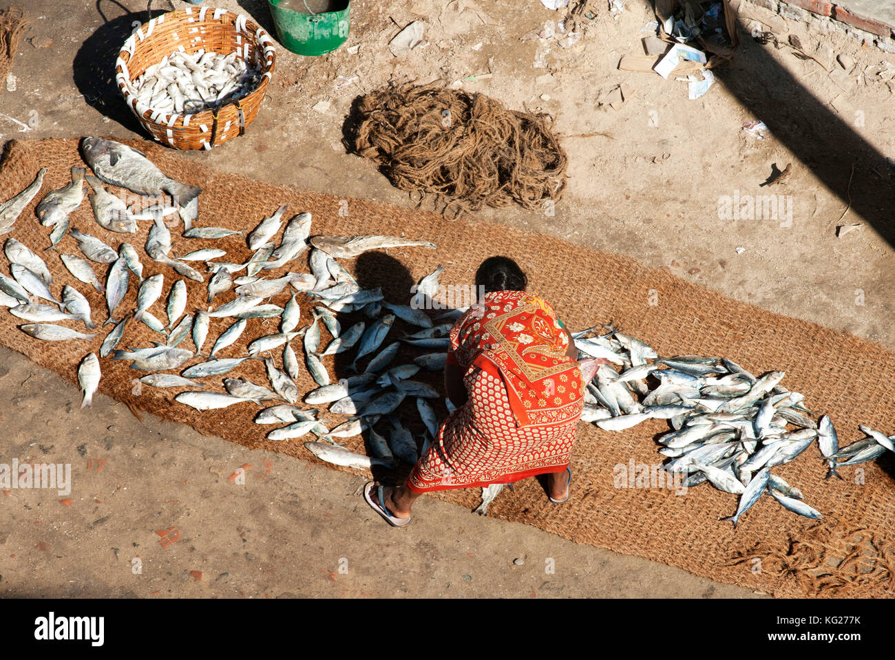 Frau Sortierung frische Fische fangen, ausgebreitet auf Kokos Matten und in der Sonne trocknen, pamban Straße, Stockbild