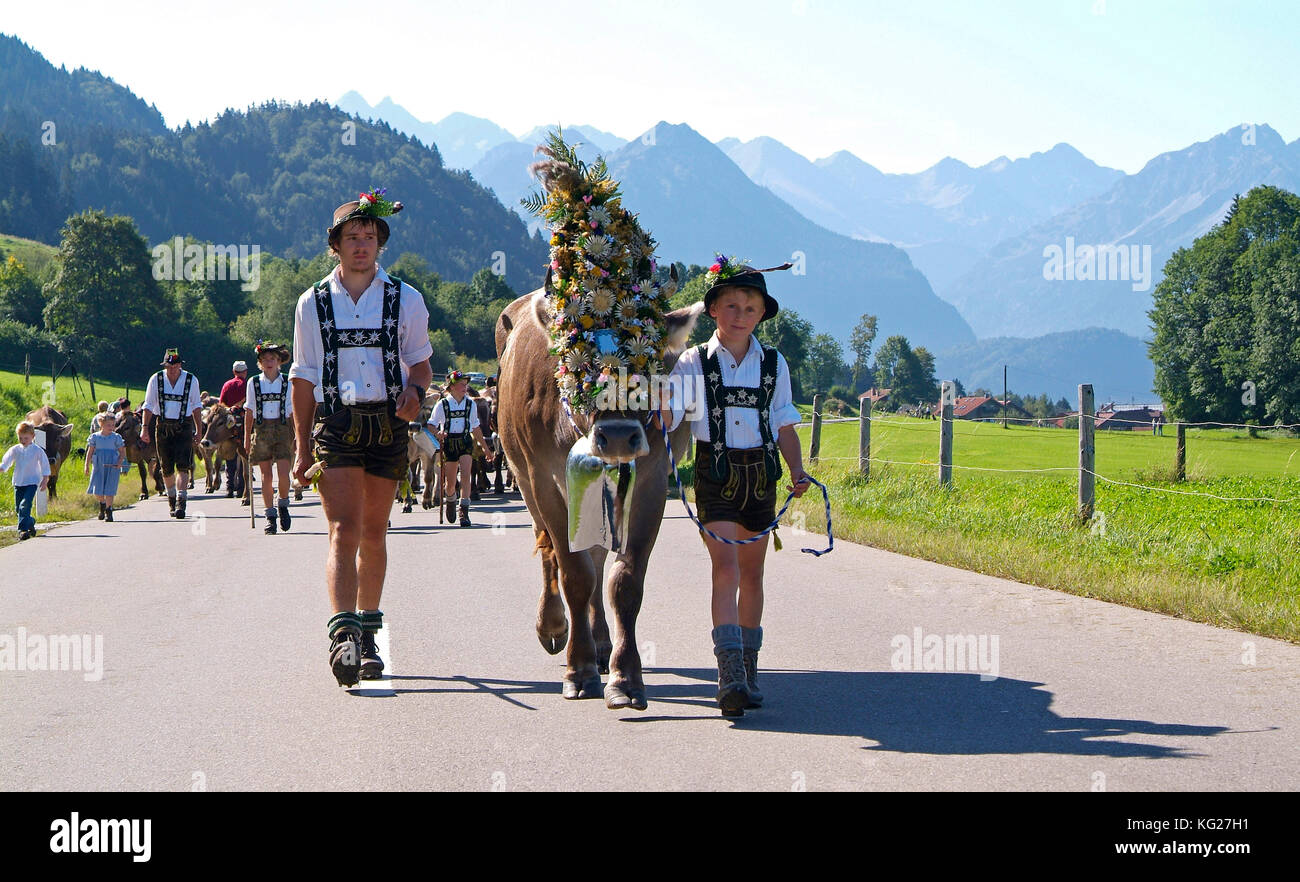 Viehscheid, die jährliche Fahrt der Rinder aus dem Sommer Almen ins Tal, schoellang, Allgäu, Bayern, Deutschland, Stockbild