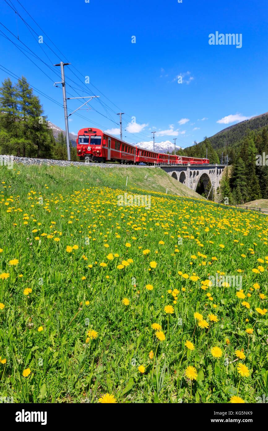 Bernina Express Zug auf Cinuos-chel Viadukt im Frühjahr, st. moritz, Kanton Graubünden, Maloja Schweiz, Stockbild