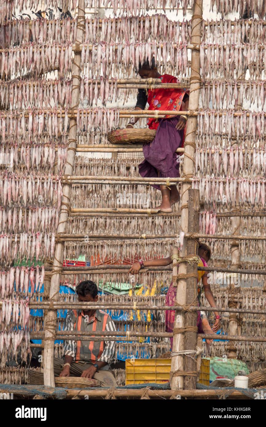 Arbeitnehmer hängen Fische in der Sonne am Strand zu trocknen, versova Mumbai Stockbild