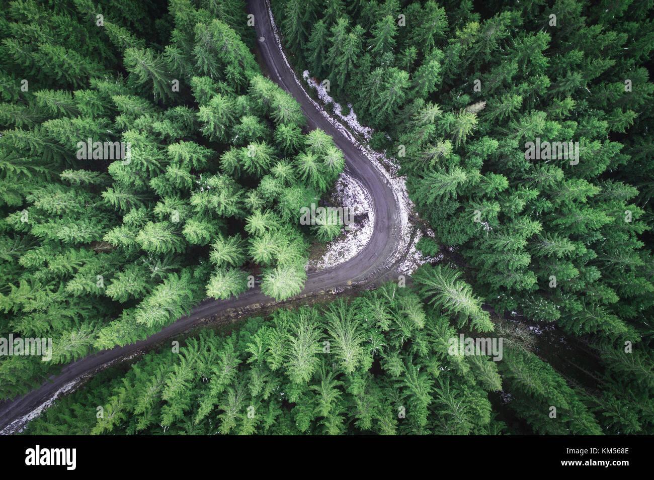 Leere Straße in einem Wald von einer Drohne Stockbild