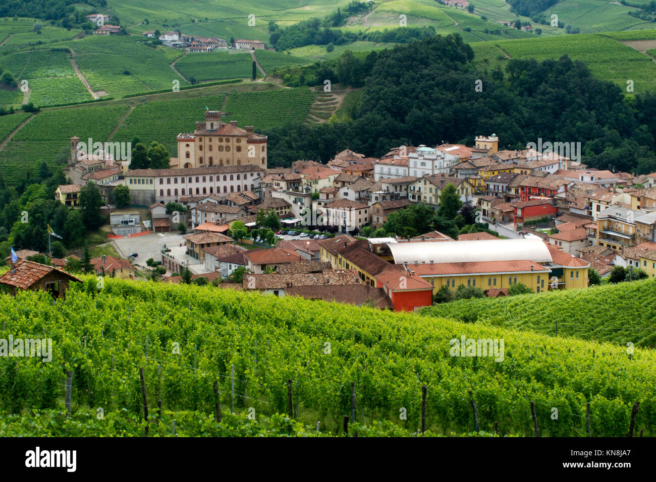 Weinberg, Barolo, Piemont, Italien Stockbild