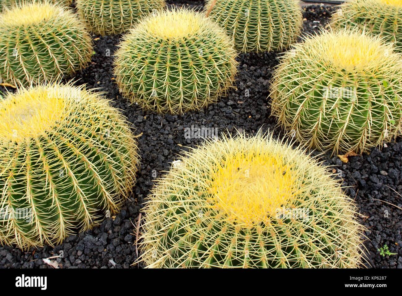 Teneriffa, Kanarische Inseln, Spanien Stockfoto