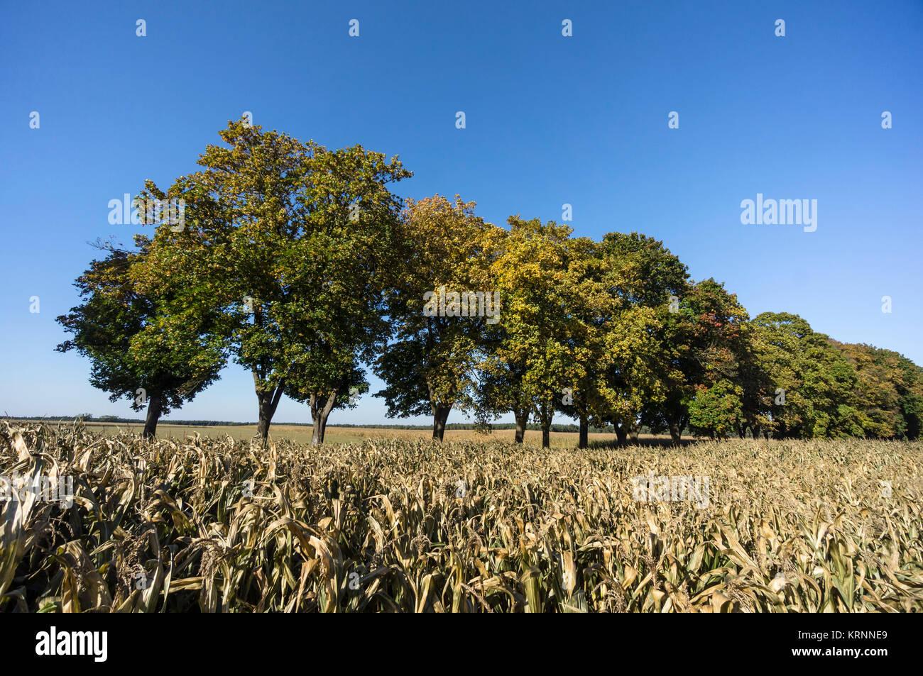 Gasse, im Herbst, in der Nähe von Ruednitz, Land Brandenburg, Deutschland Stockbild