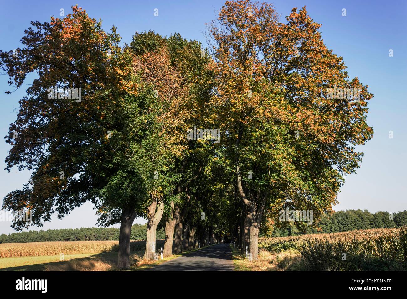 Gasse, Land Brandenburg, Deutschland Stockbild