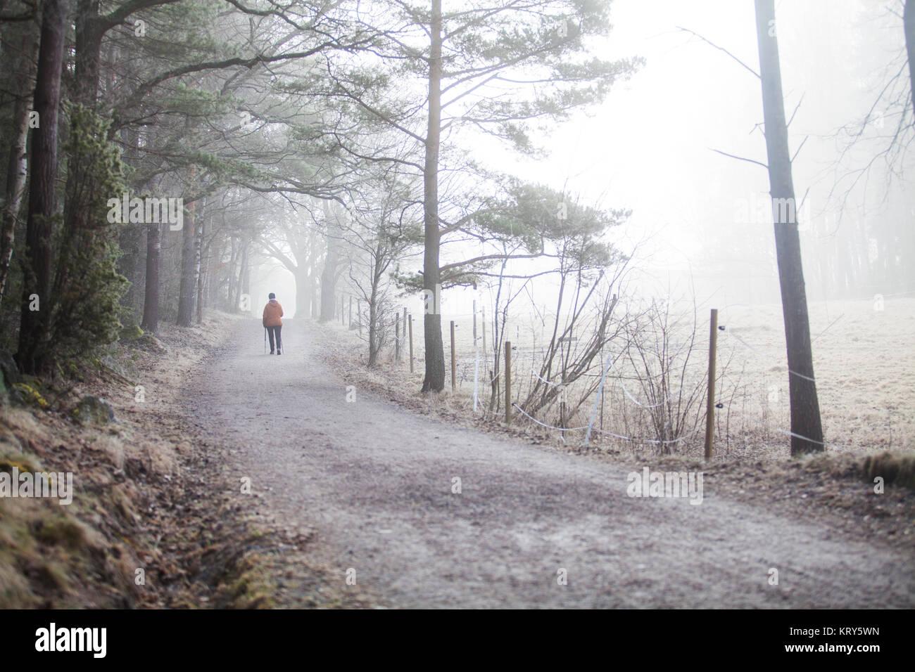 Ein Feldweg in Schweden Stockbild