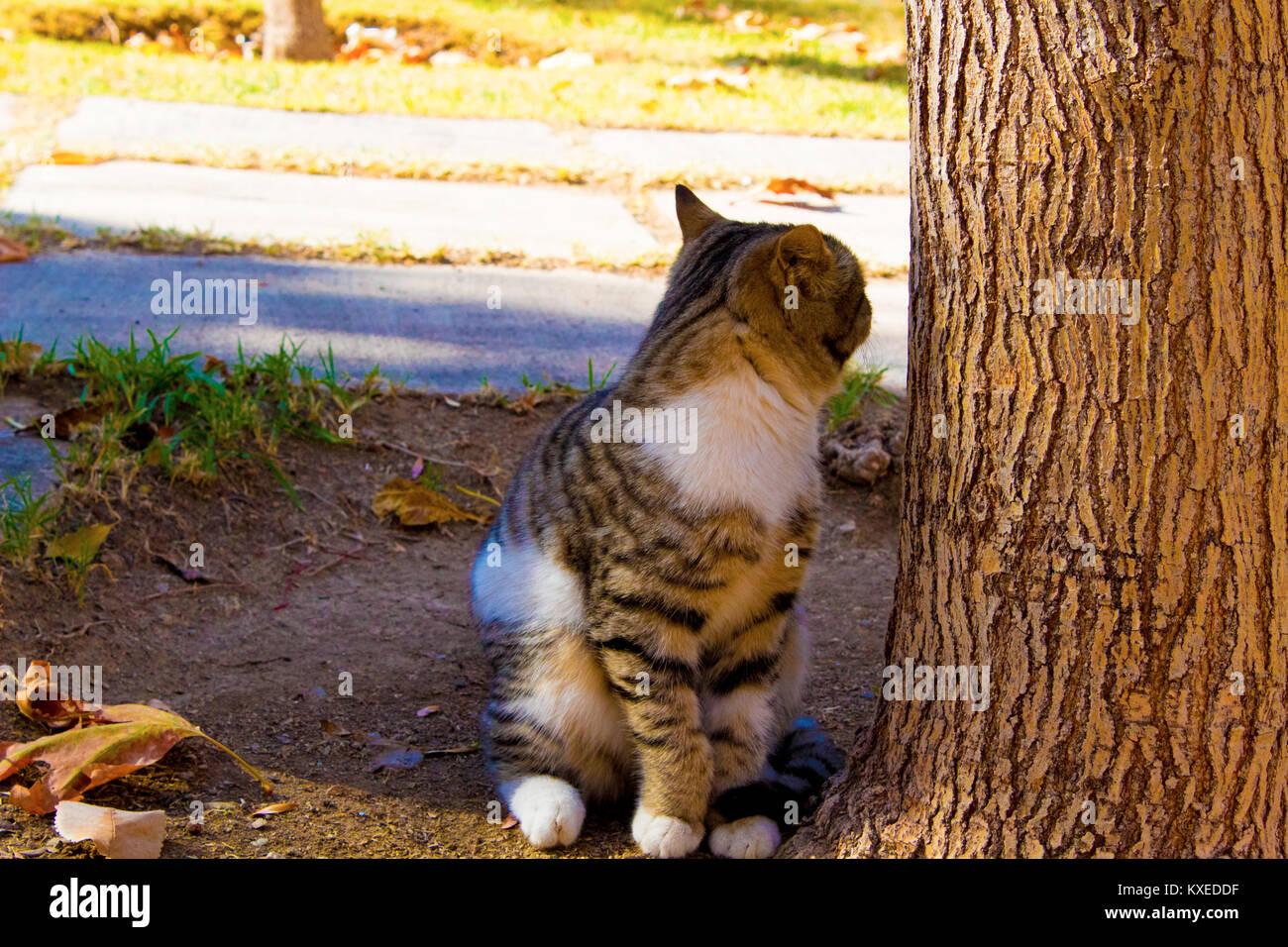 Katze im Park warten Stockbild