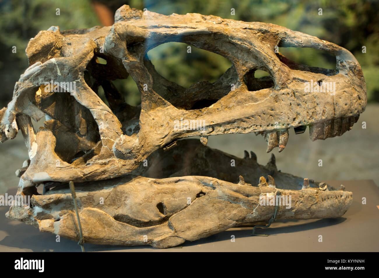 Dinosaurier Kopf