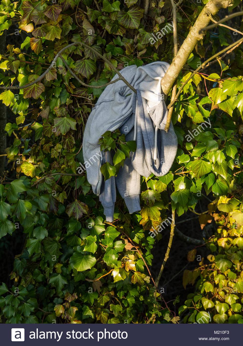 Abgebrochene Hoody Mantel hing im Baum Stockbild