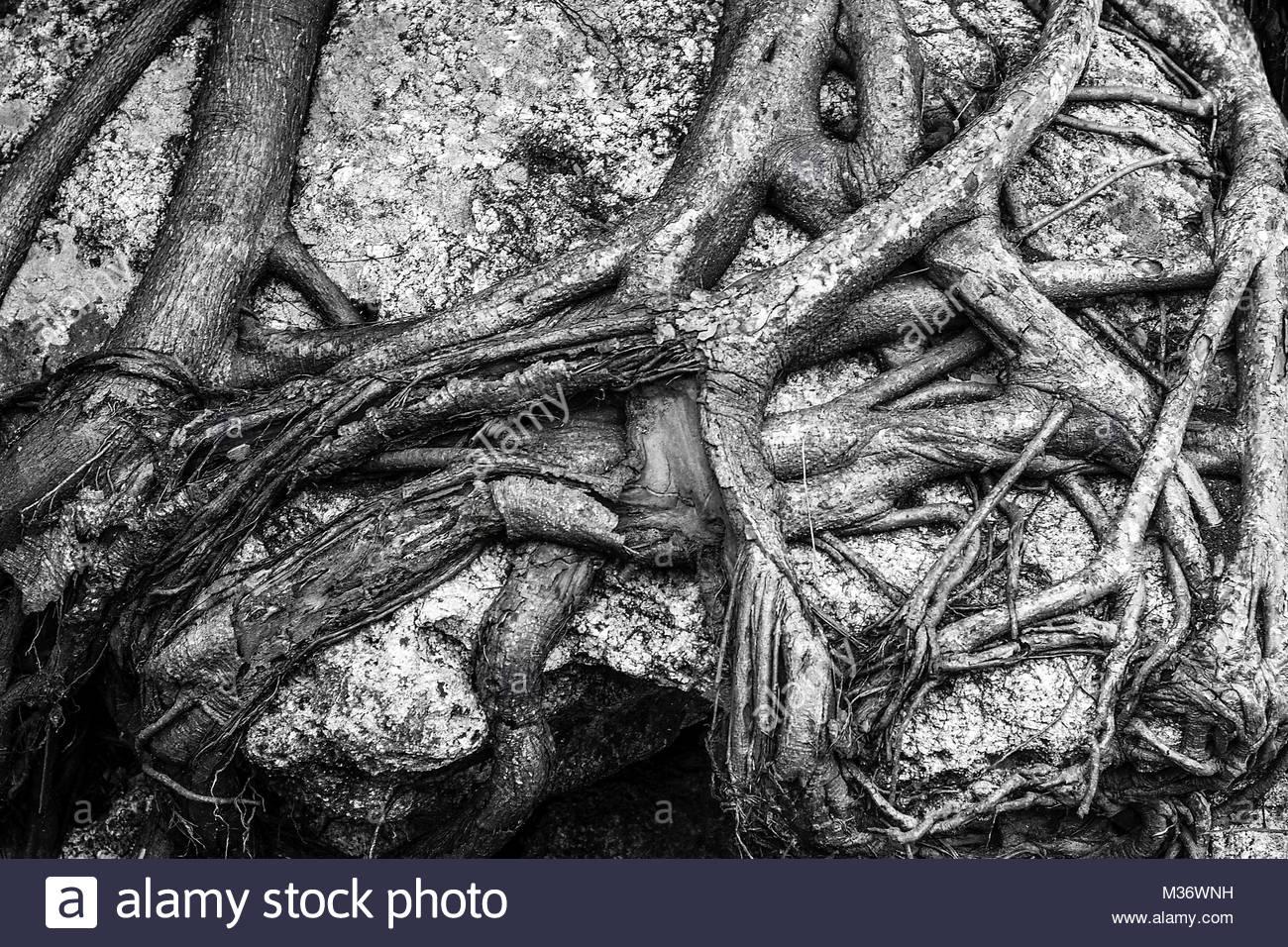 Verbindungen Stockbild