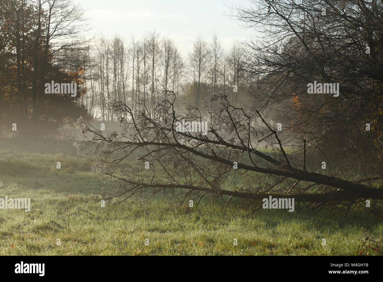Herbststimmung mit Bodennebel und abgeknickten Baumstamm, Fischerhude, Niedersachsen, Deutschland Ich Herbst in Stockbild