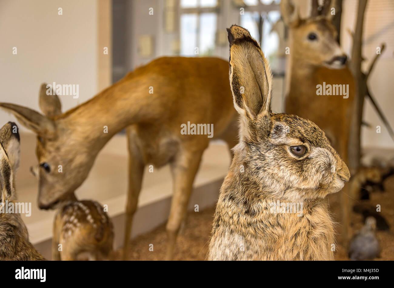 Hase und anderen Wald animalsl im Wald Museum () Waldmuseum Zwiesel, Bayerischer Wald, Bayern, Deutschland. Stockbild