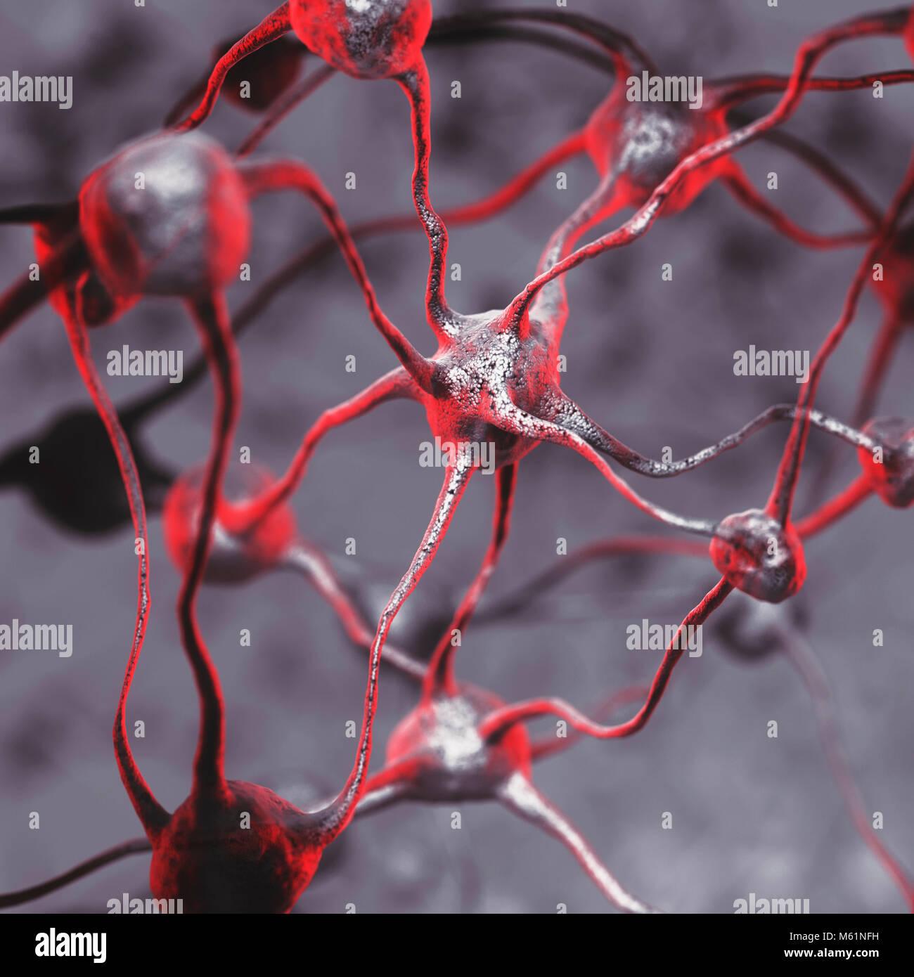 3D-Darstellung eines biologischen neuronalen Netzwerk eines menschlichen Gehirns, vernetzten Nervenzellen, Hirnzellen Stockbild