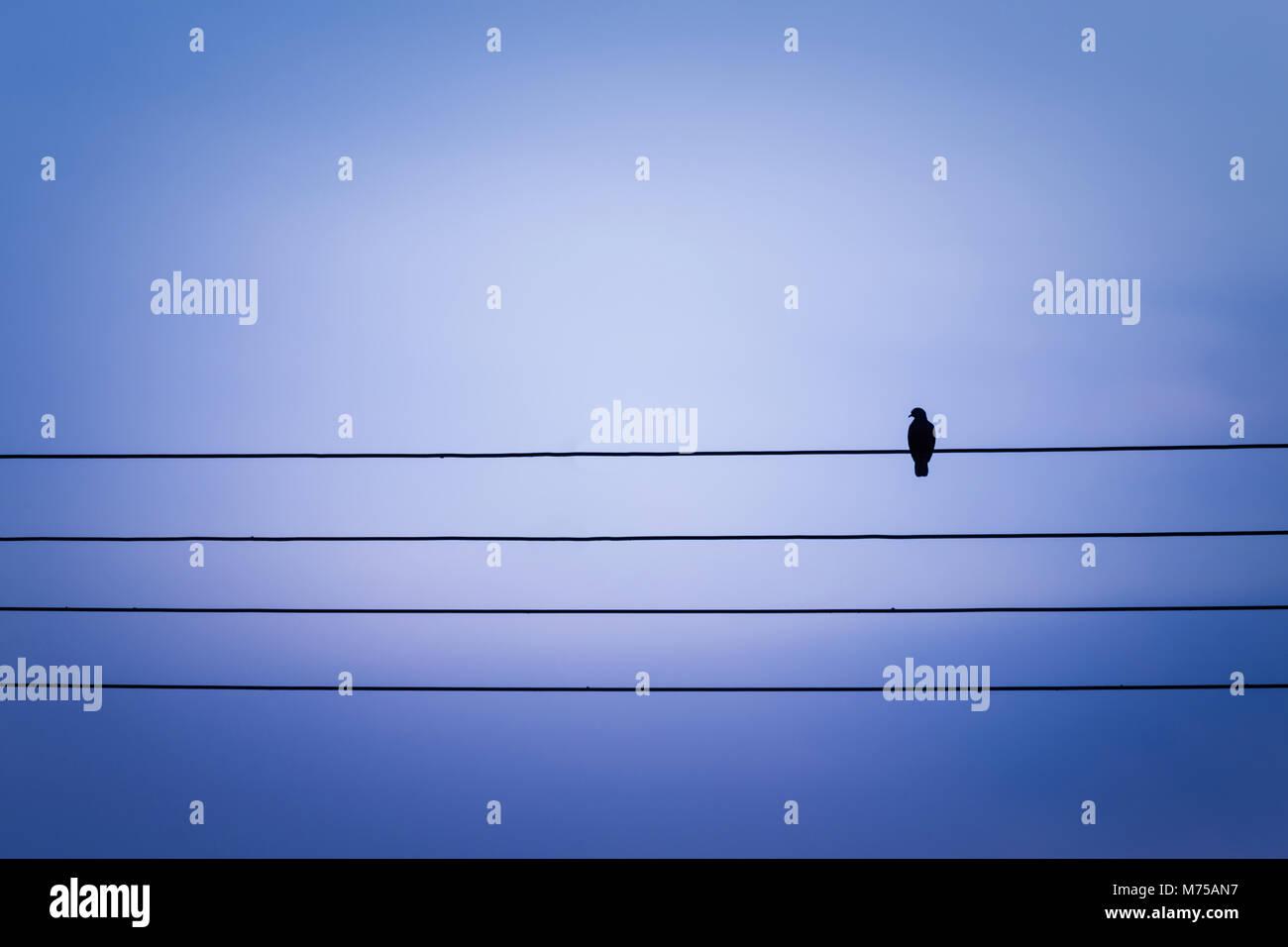 Ungewöhnlich Vögel Auf Einem Draht Drucken Zeitgenössisch ...