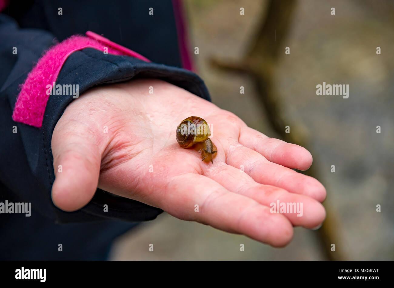 Kleine Schnecke auf einer menschlichen Hand. Stockbild