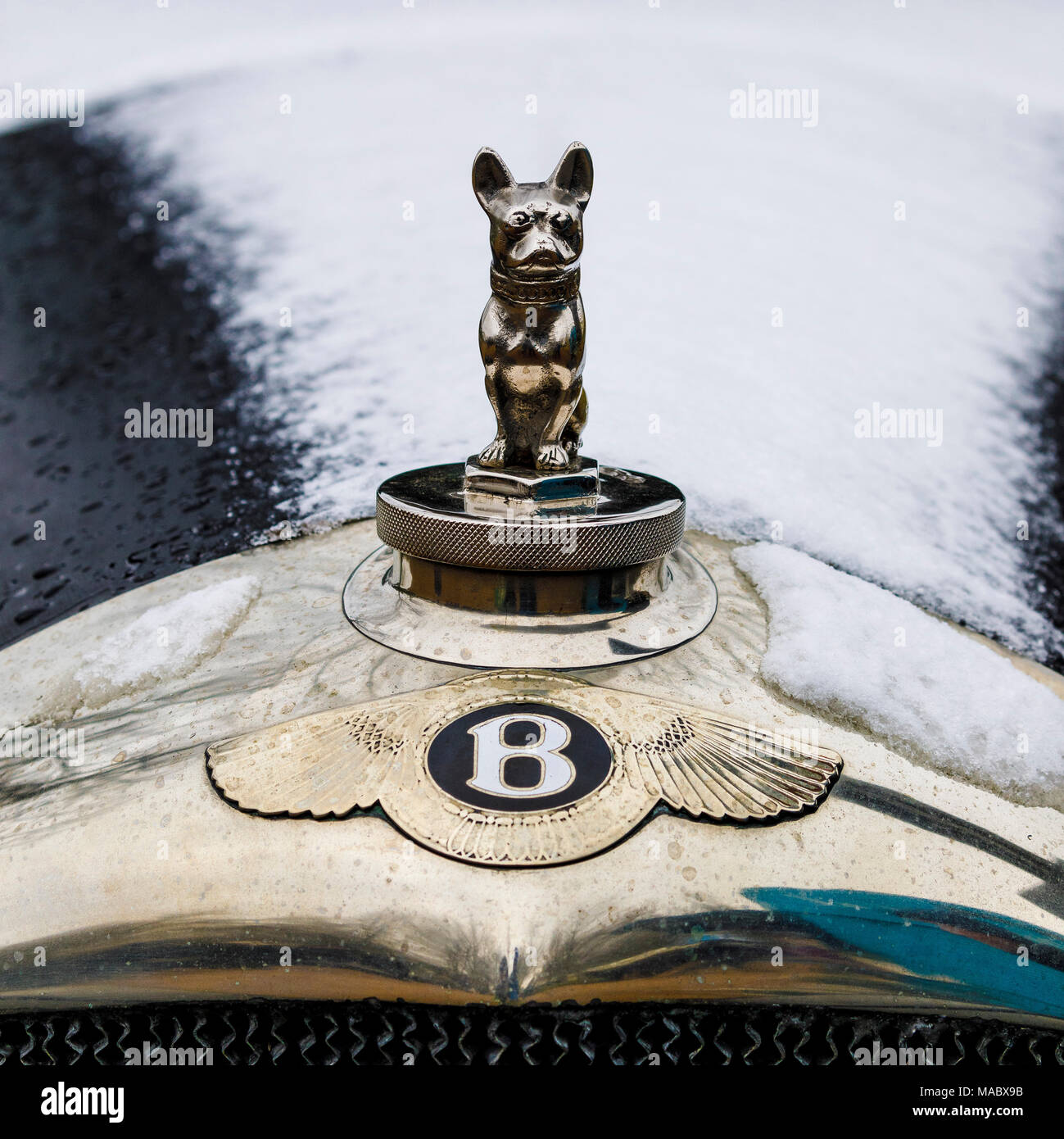Der Bentley Motorhaube Motiv und Abzeichen an der Vorderseite eines schneebedeckten Haube. Goodwood 76th Mitgliederversammlung, Sussex, UK. Stockbild
