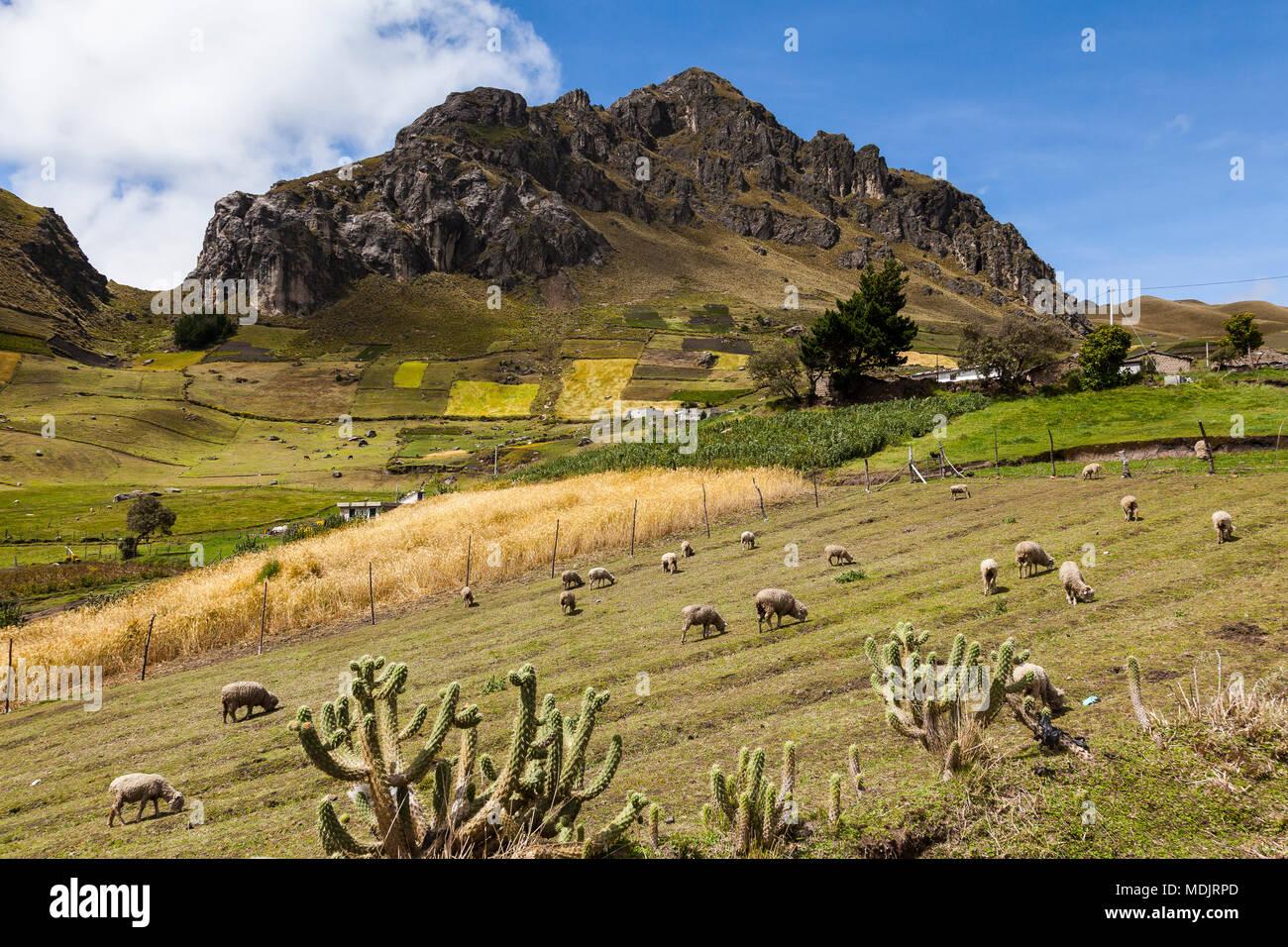 Farmen und Kulturen am Fuße der Hügel von Rock Zumbahua in der Provinz Cotopaxi, Ecuador Stockbild