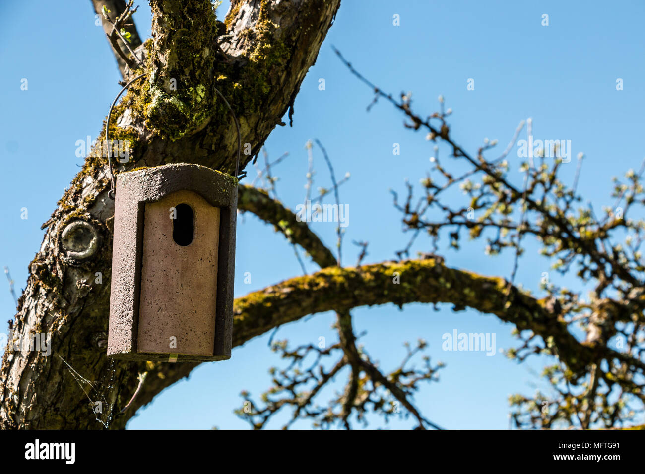 Kleiner Vogel Tabelle auf einem alten bemoosten apple tree Stockbild