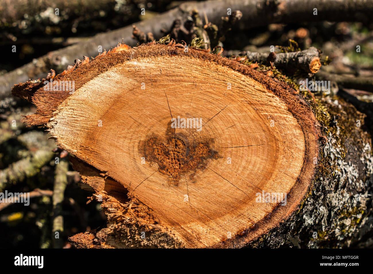Gesägte Holz im Garten Stockbild