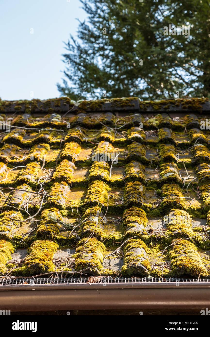 Moosbewachsenen Dach einer Hütte im Garten Stockbild