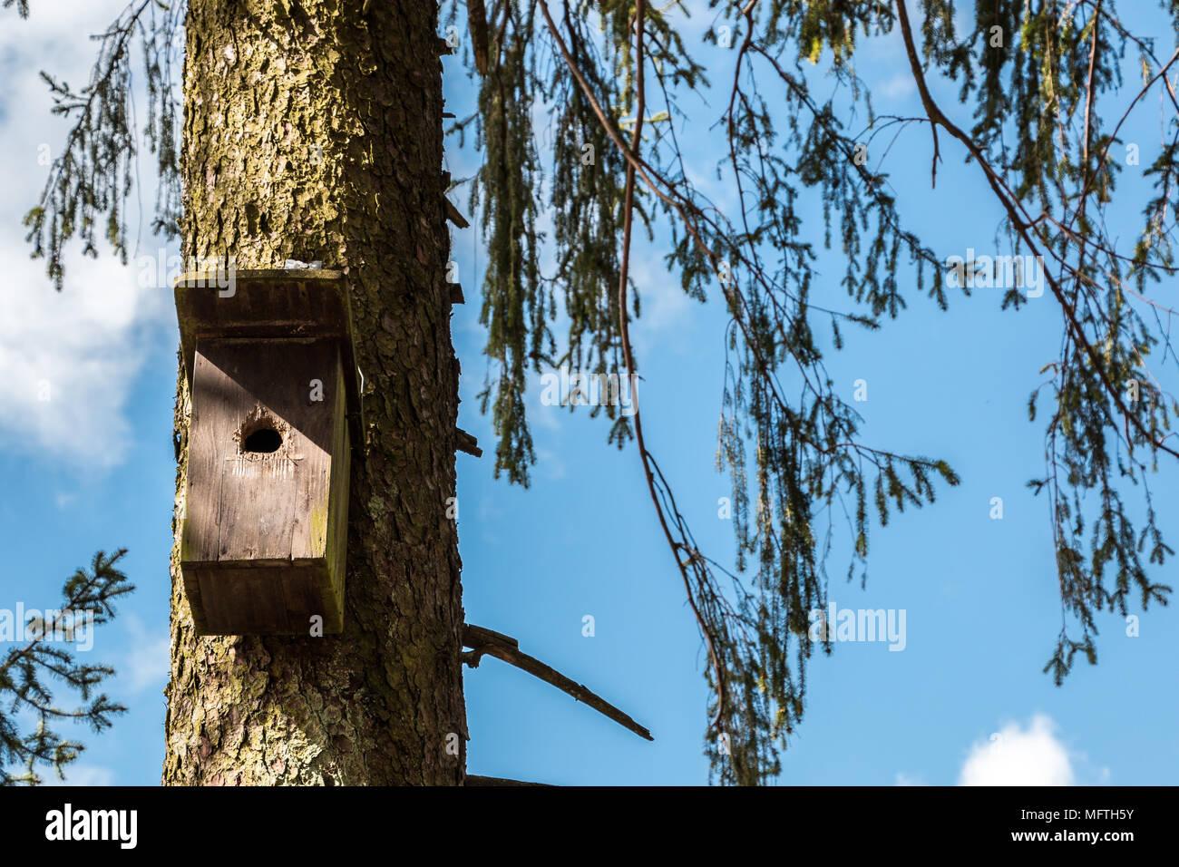 Kleiner Vogel Tabelle auf einem alten moosigen Baum Stockbild