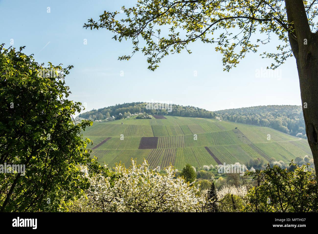 Weinberge und blühende Bäume in der Nähe des Dorfes Stockbild