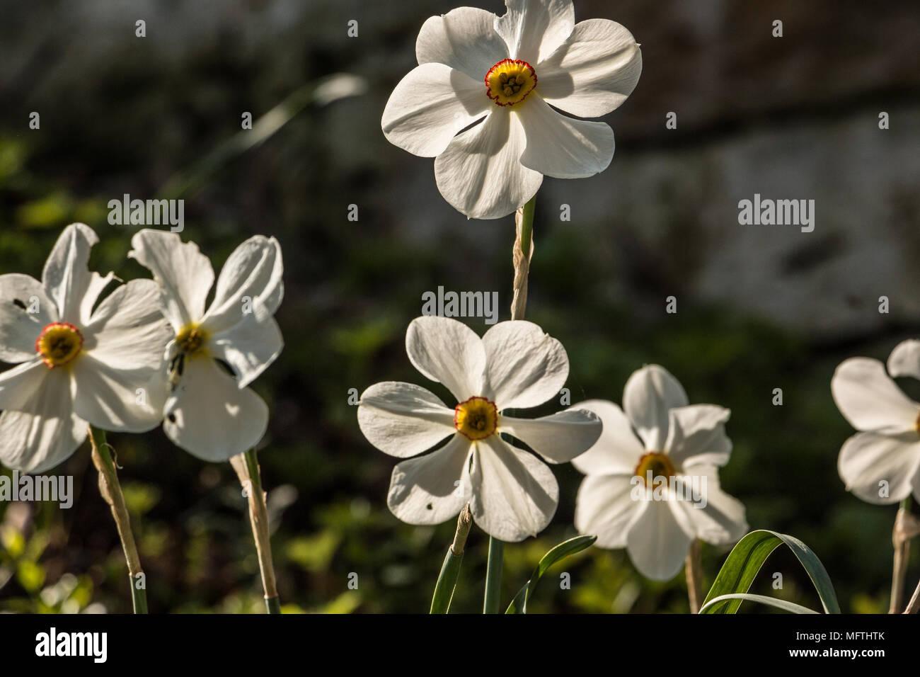 Weiße Blumen auf den grünen Bereich Stockbild