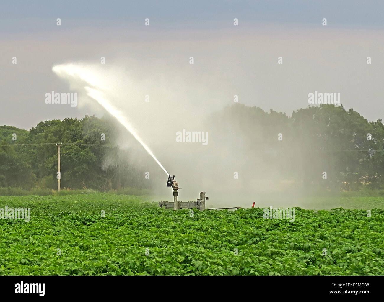 Laden Sie dieses Alamy Stockfoto Sprinkler in einem Yorkshire Ernte der Kartoffeln, Sommer, England, Großbritannien - P9MD88