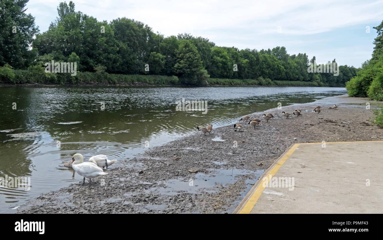 Laden Sie dieses Alamy Stockfoto Warrington Ruderverein, Ebbe Mersey River, Sommer 2018, Cheshire, North West England, Großbritannien - P9MF43