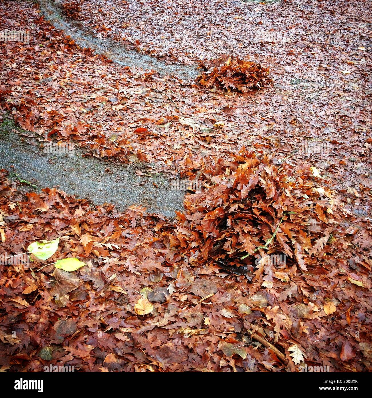 Bremsspuren in nasses Laub Stockbild