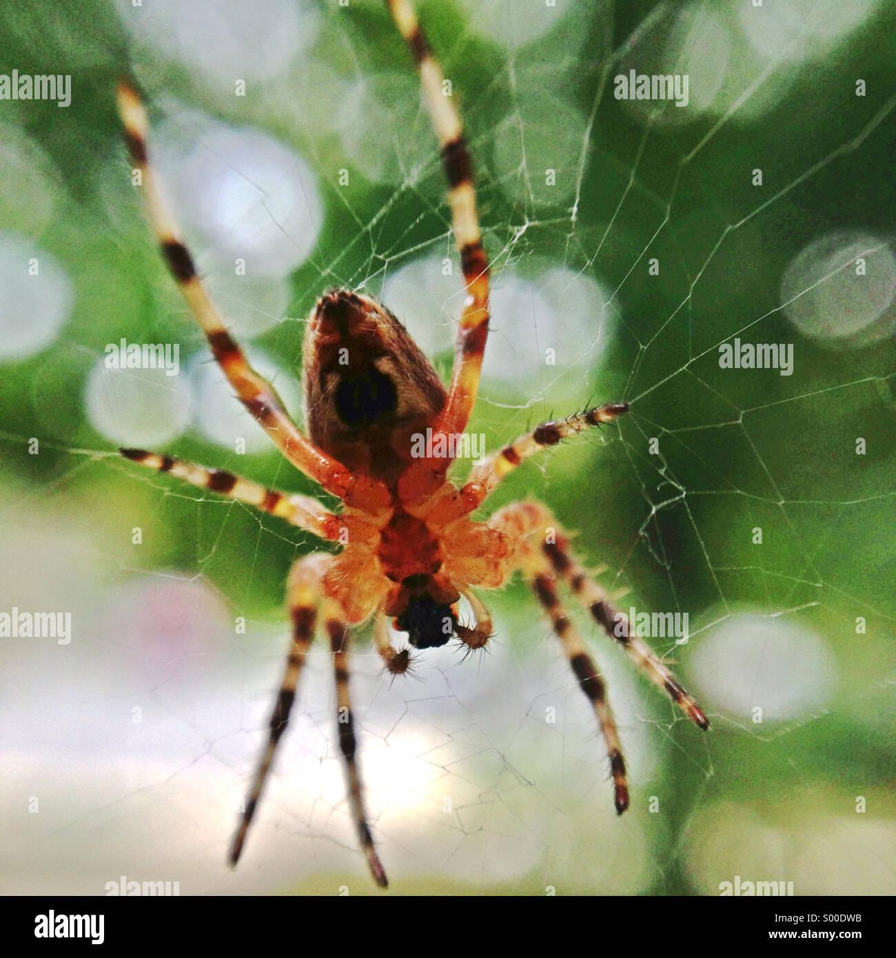 Spinne eine Web machen. Stockbild