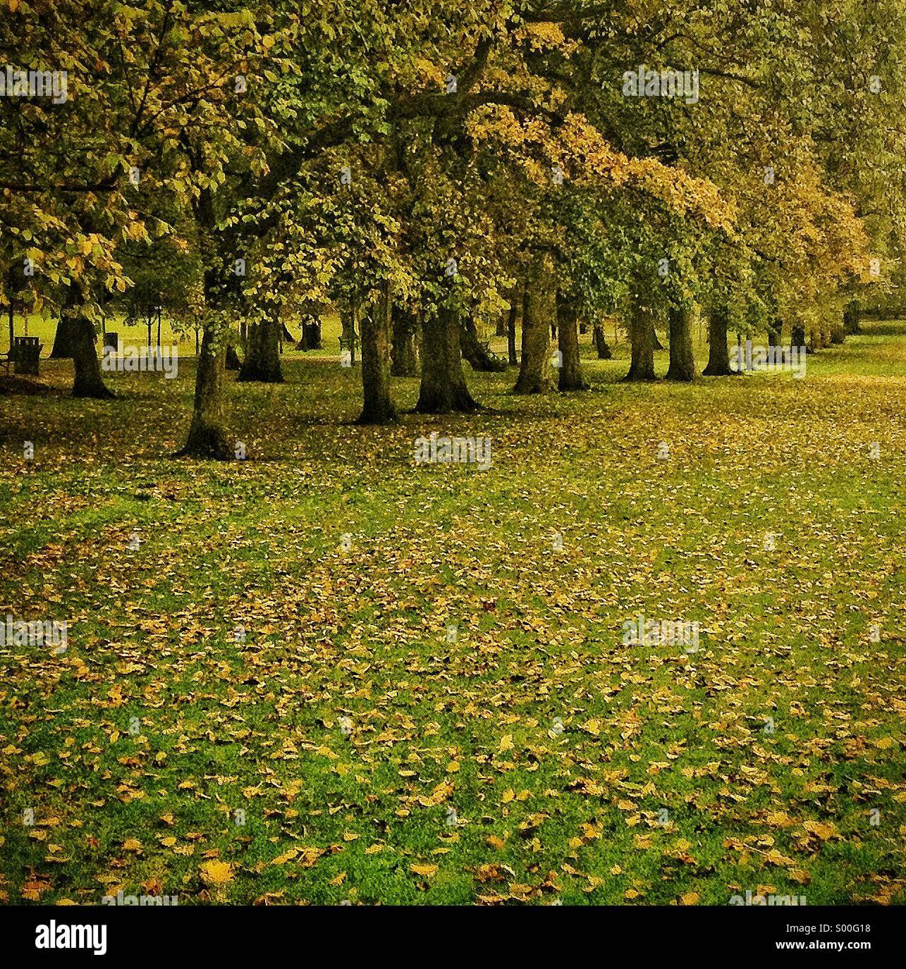 Bäumen gesäumten Pfad im Herbst, Edinburgh, UK Stockbild
