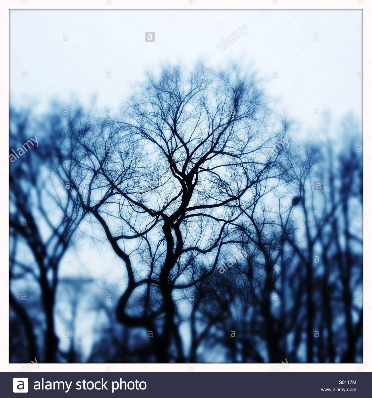 Bare Winterbäume Stockbild