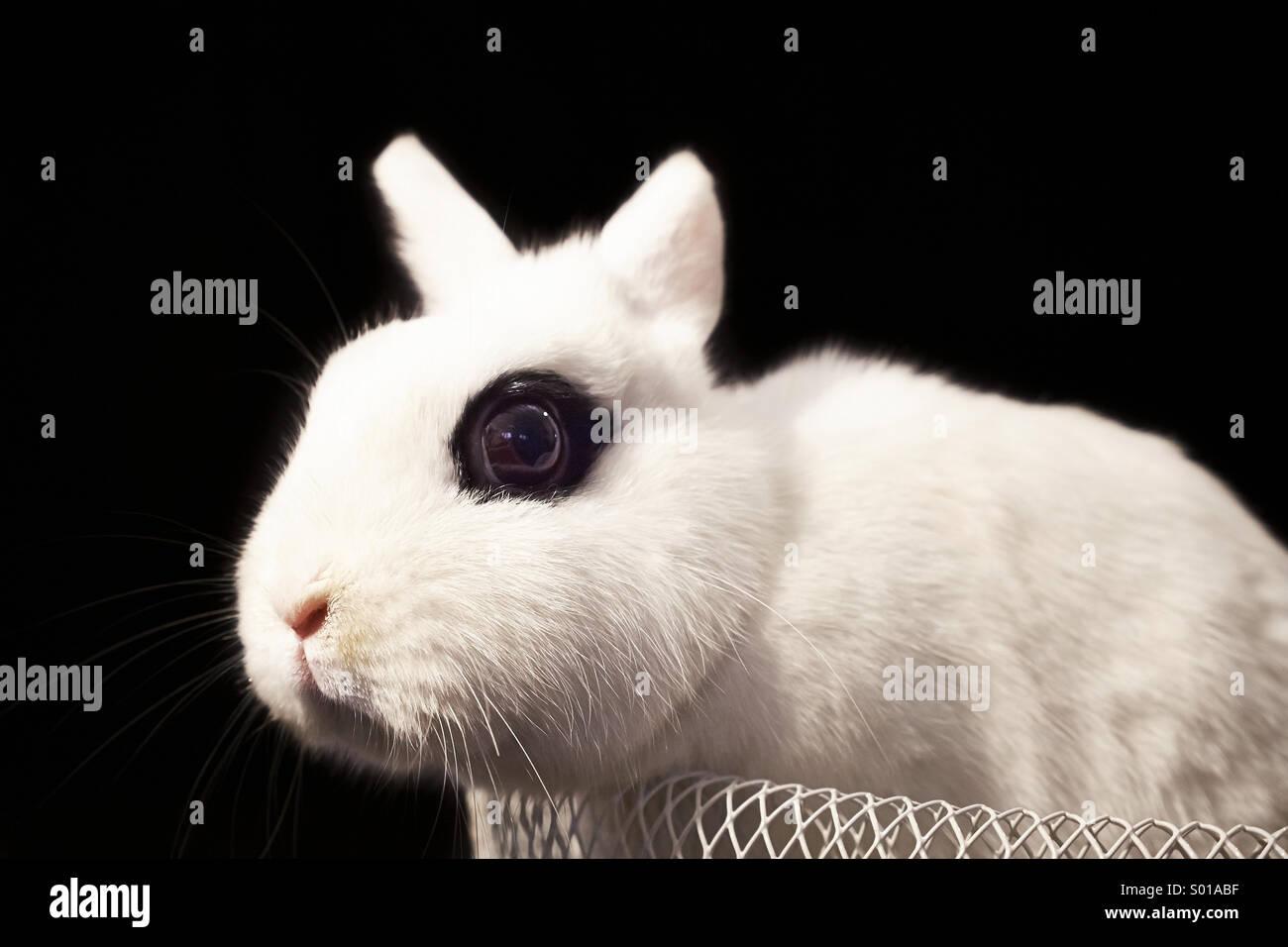 Weißes Kaninchen in Korb Stockbild