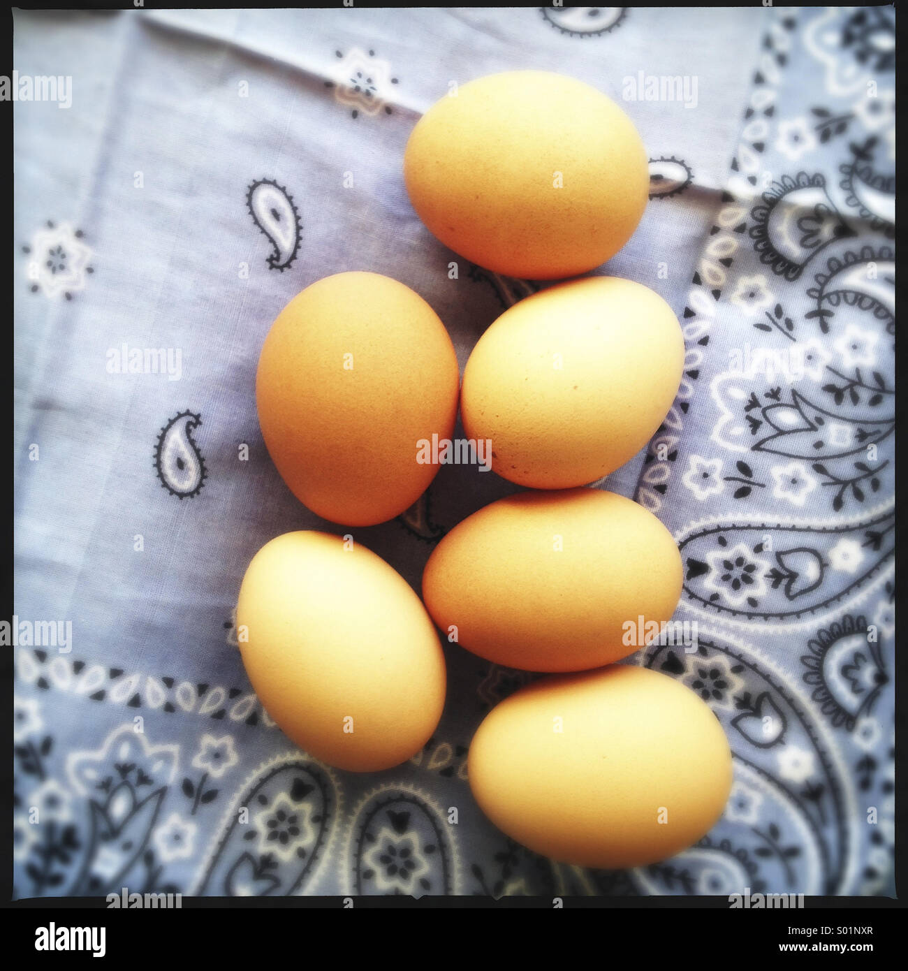 Halbes Dutzend braunen Eiern Stockbild