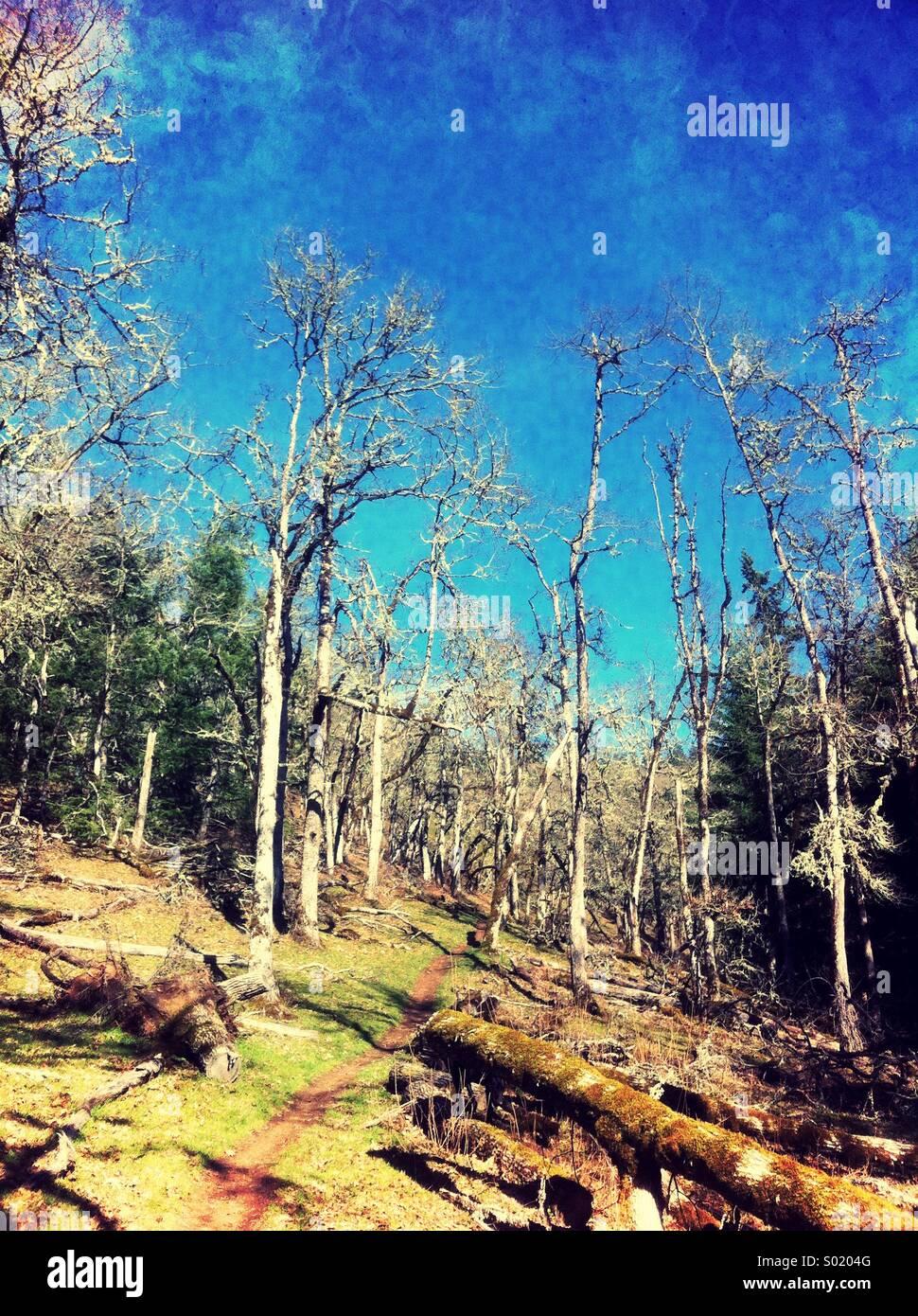 Vertikale Wald Szene Stockbild