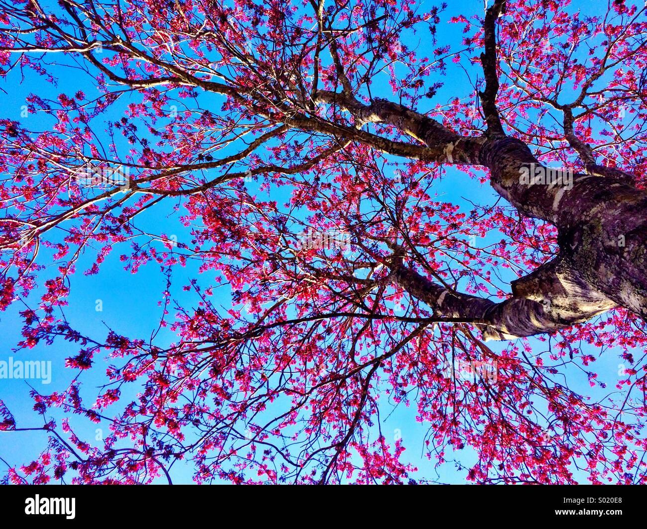 Baum Frühling Stockbild