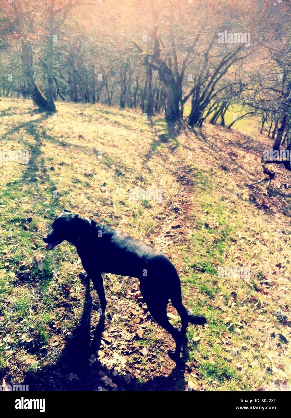 Hund auf Wanderweg in den Frühling Stockbild