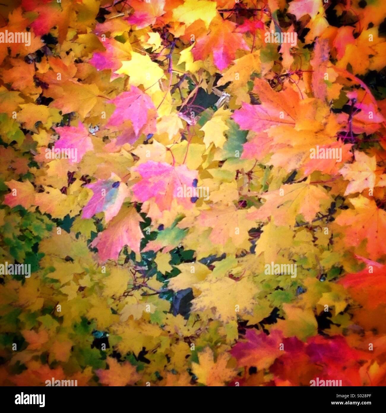 Farben des Herbstes ergeben sich aus den Blättern der Bäume in einem Feld in Nordpolen. Stockbild